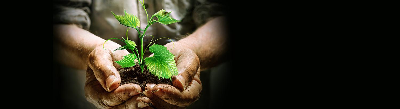 Na Bio Cabaz,<br>o melhor<br>que a terra dá<br>é para si.