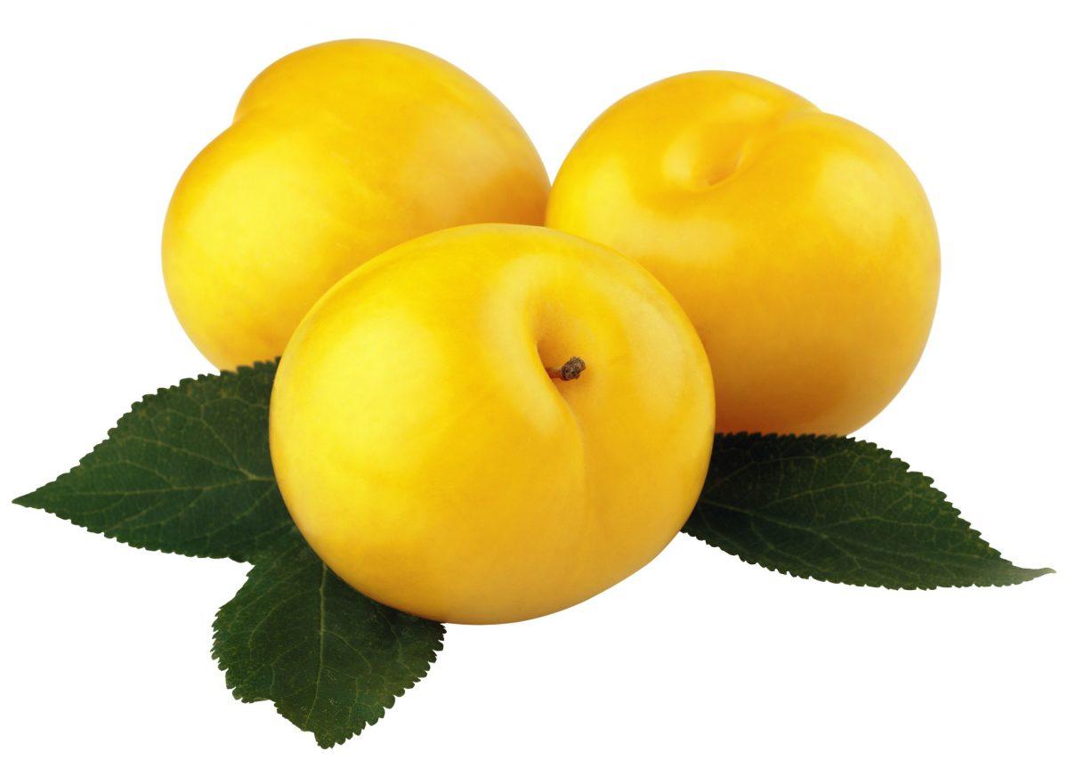 ameixa amarela biologica