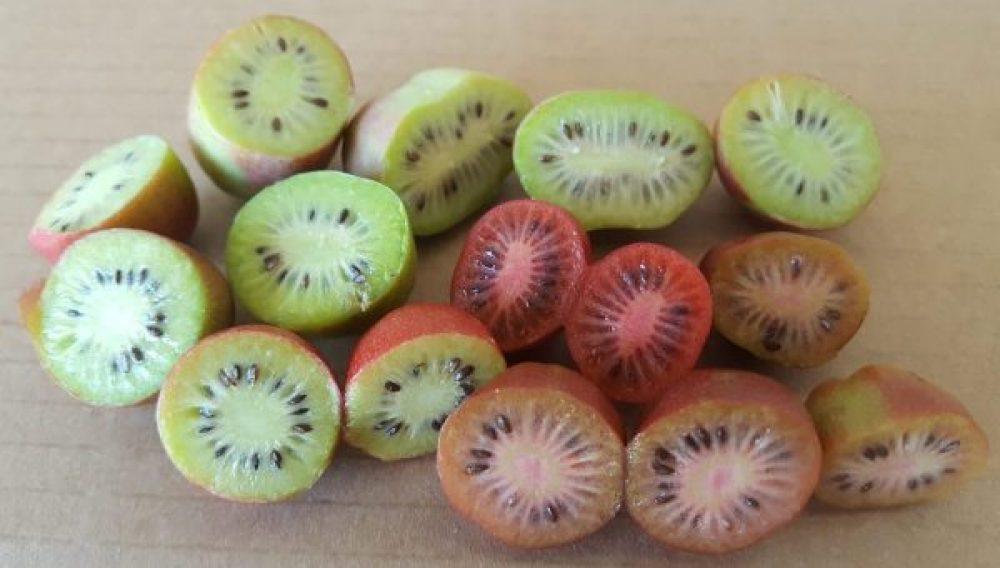 mini kiwi bio